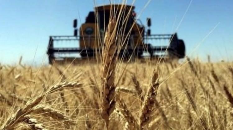 Buğday Üretiminde Kritik Seviye!