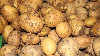 """Bakan Fakıbaba'dan """"patates"""" açıklaması"""