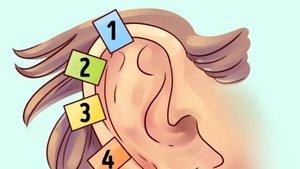 Kulaktaki hangi bölge ne işe yarıyor?