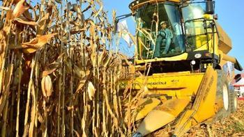 TMO'dan mısır üreticisine ücretsiz depo ve finansman imkanı